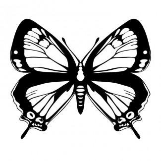 Vlinder gedetaileerd